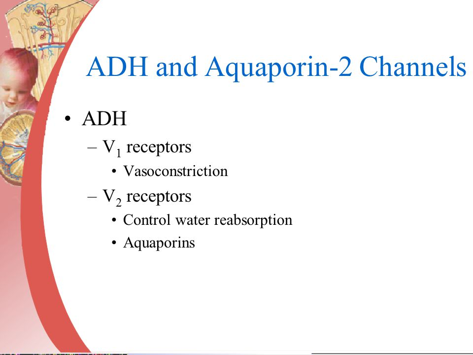 ADH and Aquaporin-2 Channels