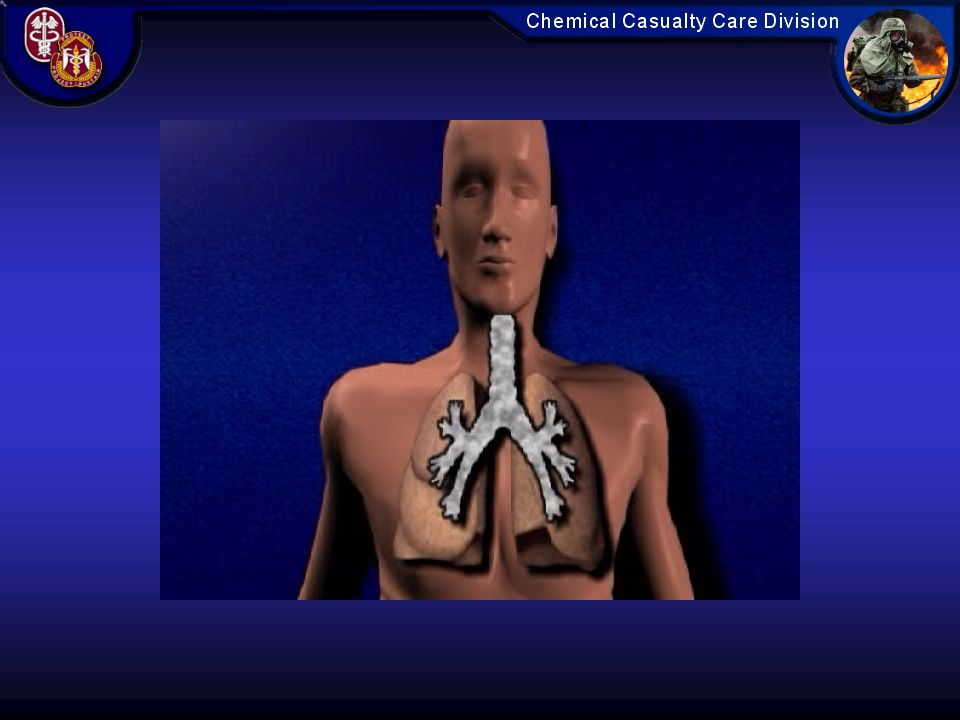This animation illustrates how peripherally acting pulmonary agents attack and damage the thin alveolar-capillary membrane, increasing the leak of fluid into the interstitium.
