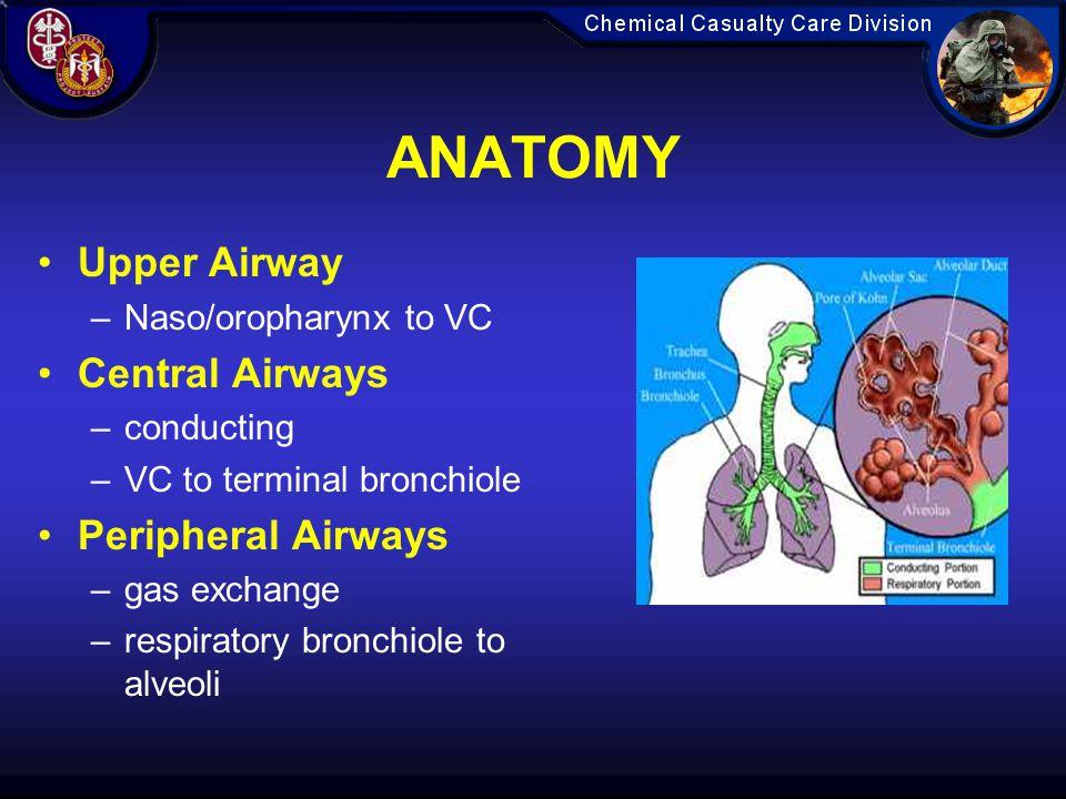 ANATOMY Upper Airway Central Airways Peripheral Airways