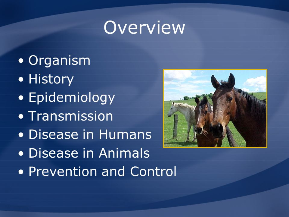 Overview Organism History Epidemiology Transmission Disease in Humans