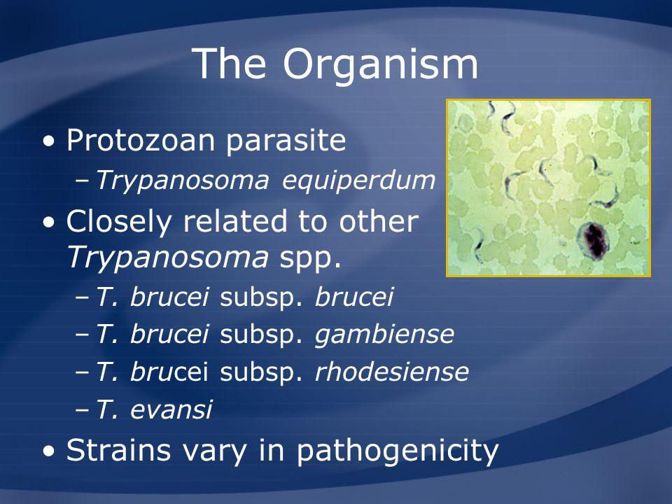 The Organism Protozoan parasite