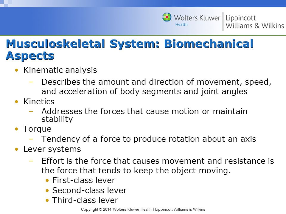 Musculoskeletal System: Biomechanical Aspects