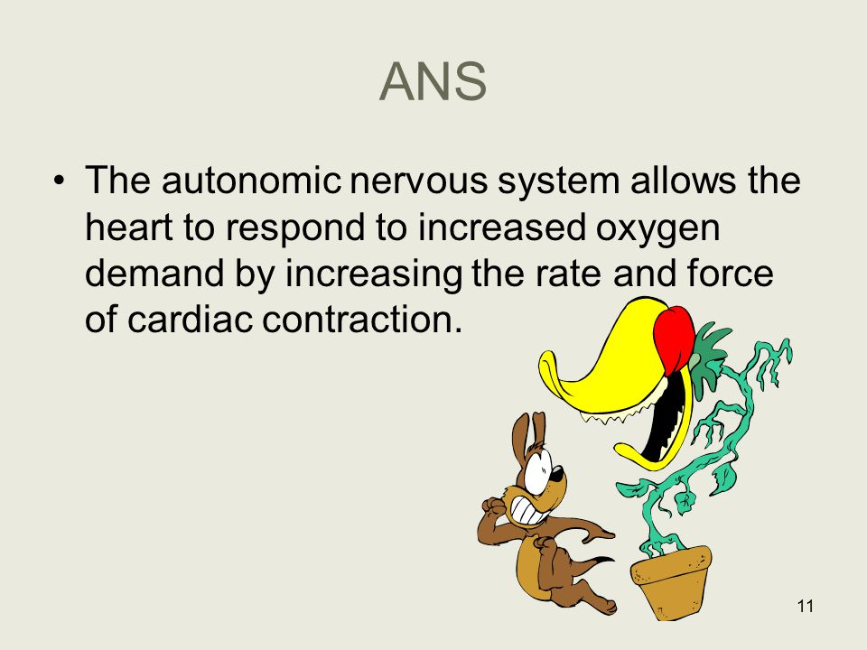 ANS The autonomic nervous system allows the heart to respond to increased oxygen demand by increasing the rate and force of cardiac contraction.