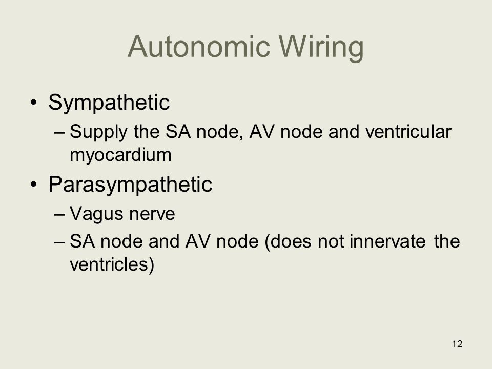 Autonomic Wiring Sympathetic Parasympathetic