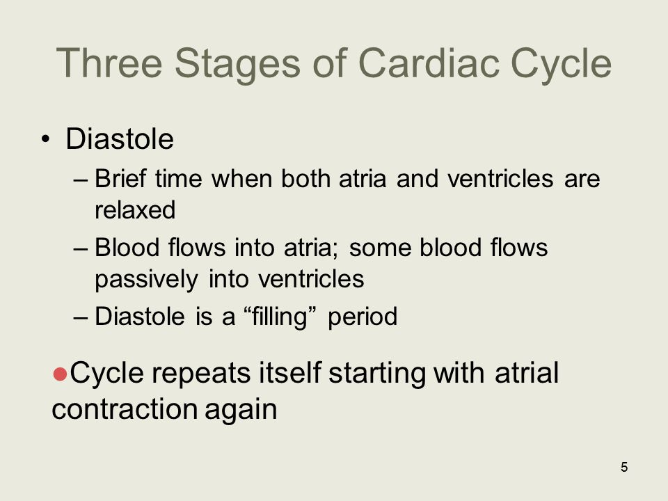 Three Stages of Cardiac Cycle