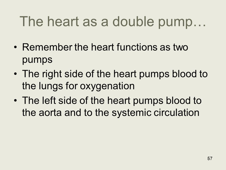The heart as a double pump…