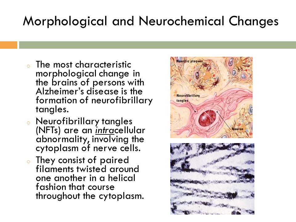 Morphological and Neurochemical Changes