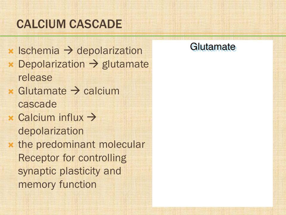 Calcium Cascade Ischemia  depolarization