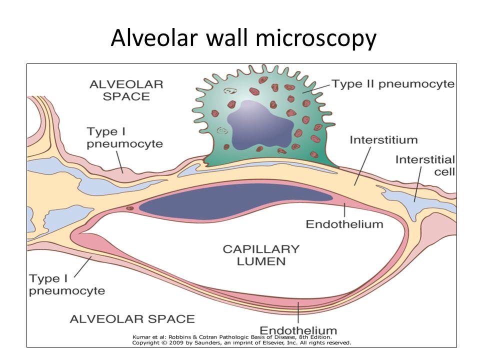 Alveolar wall microscopy