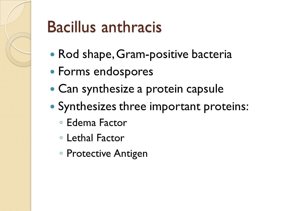 Bacillus anthracis Rod shape, Gram-positive bacteria Forms endospores