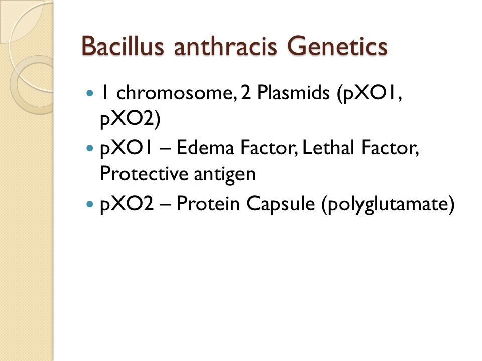 Bacillus anthracis Genetics