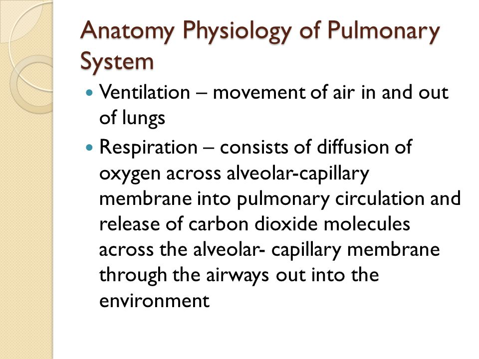 Anatomy Physiology of Pulmonary System