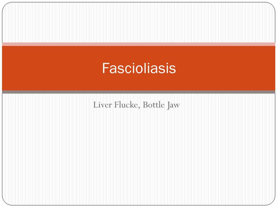 Liver Flucke, Bottle Jaw