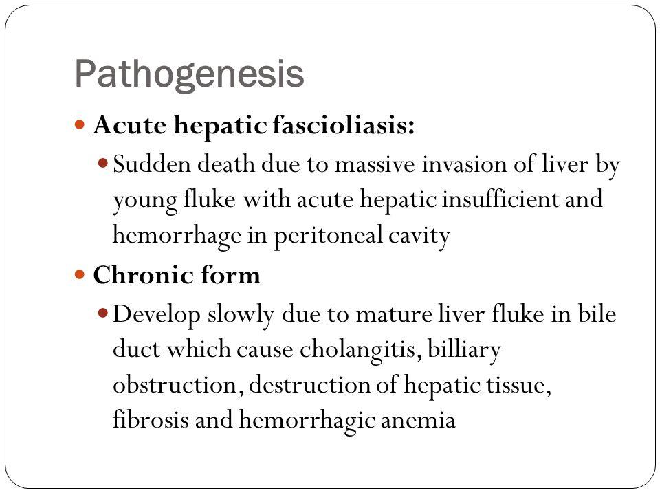 Pathogenesis Acute hepatic fascioliasis: