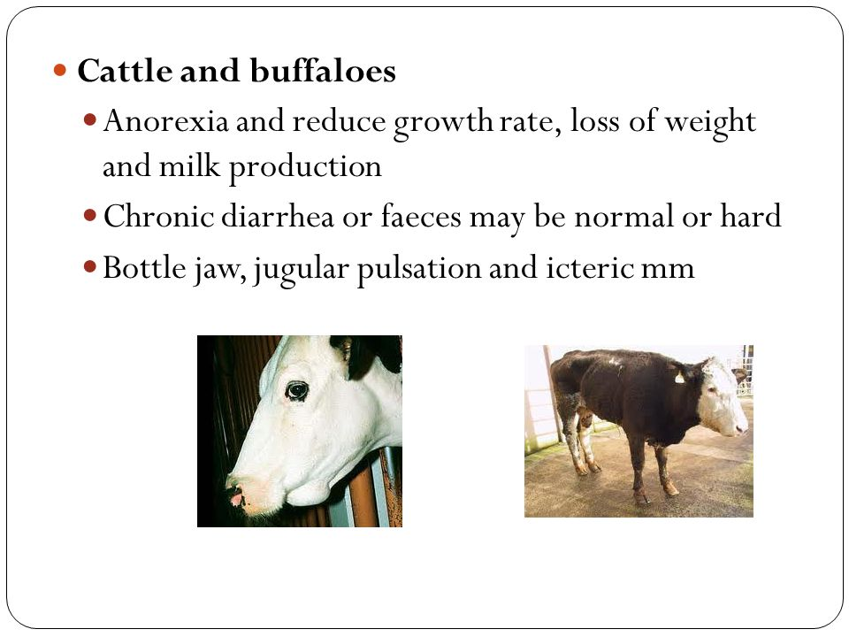 Cattle and buffaloes Anorexia and reduce growth rate, loss of weight and milk production. Chronic diarrhea or faeces may be normal or hard.