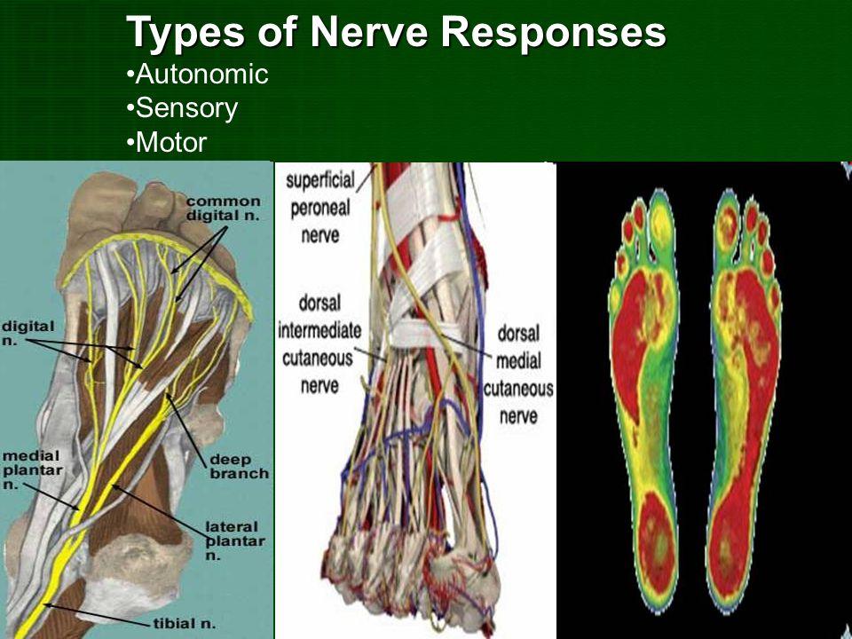 Types of Nerve Responses
