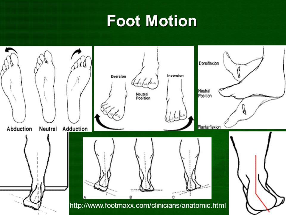 Foot Motion http://www.footmaxx.com/clinicians/anatomic.html