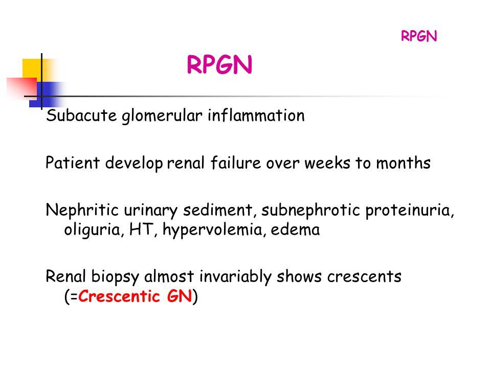 RPGN Subacute glomerular inflammation