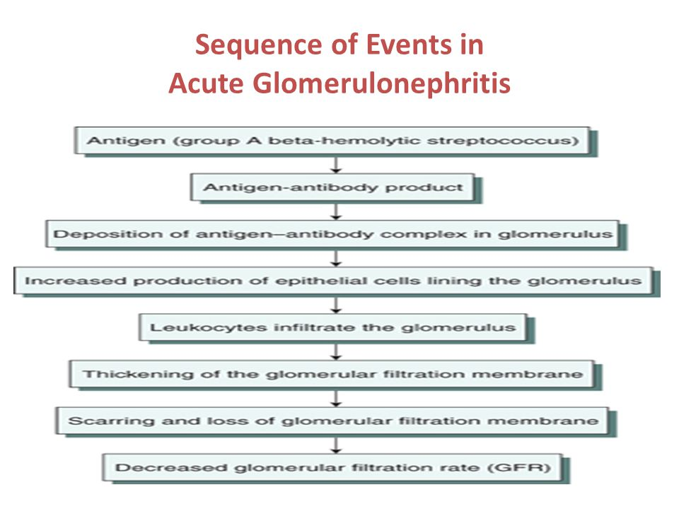 Sequence of Events in Acute Glomerulonephritis