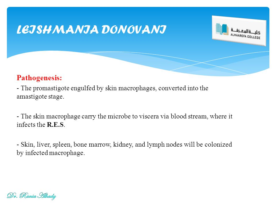 LEISHMANIA DONOVANI Pathogenesis: Dr. Rania Alhady