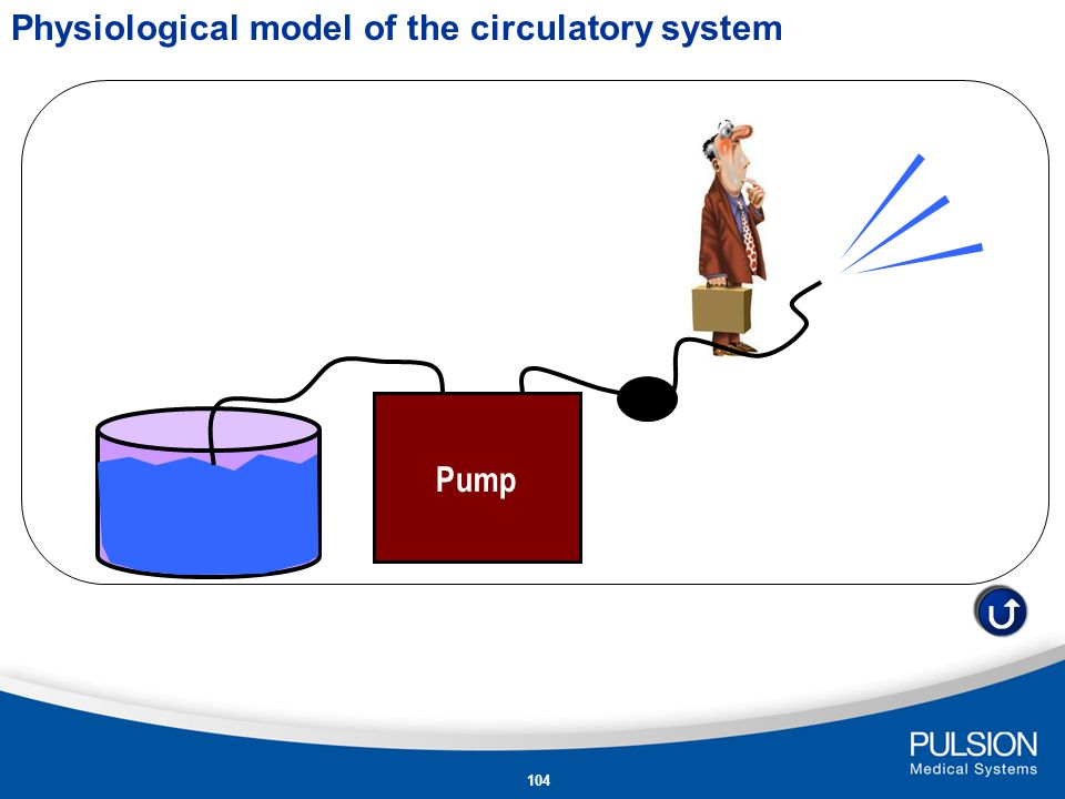 Physiological model of the circulatory system