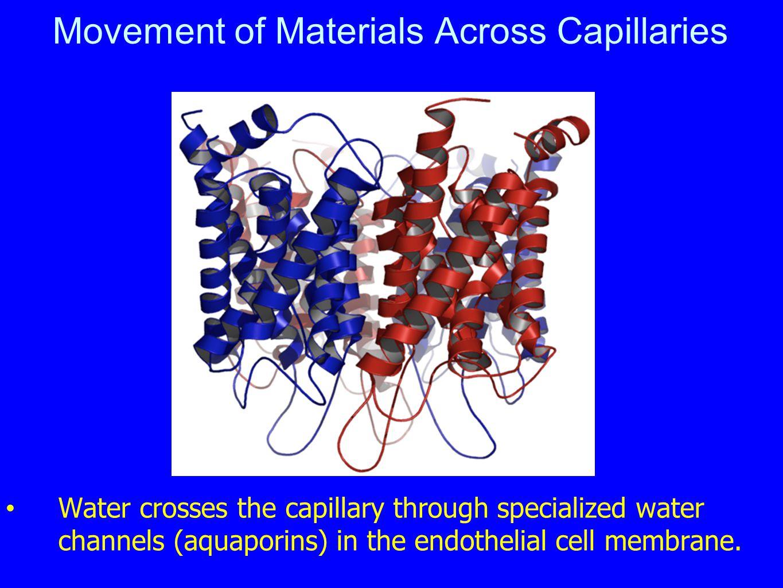 Movement of Materials Across Capillaries