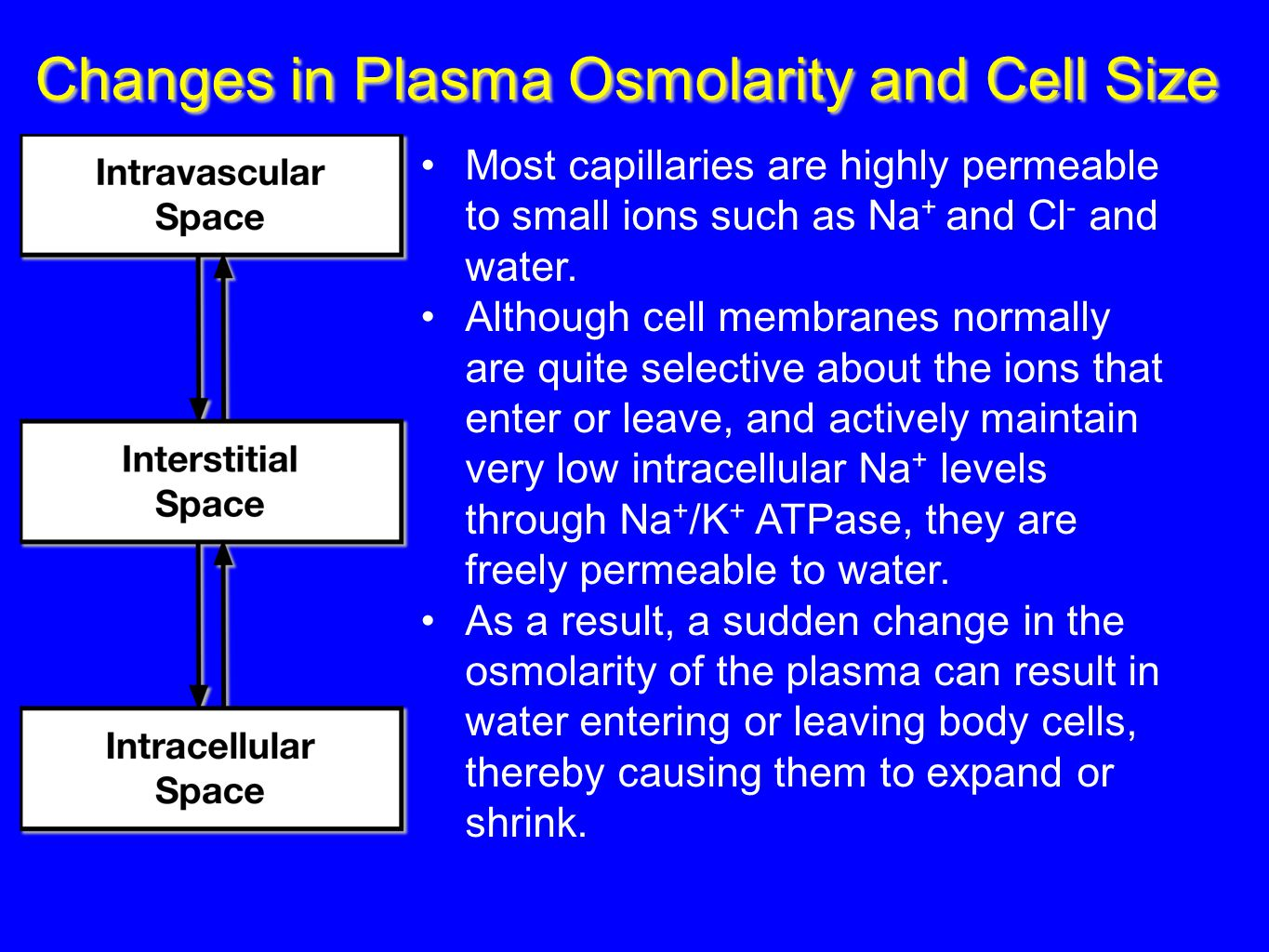 Changes in Plasma Osmolarity and Cell Size