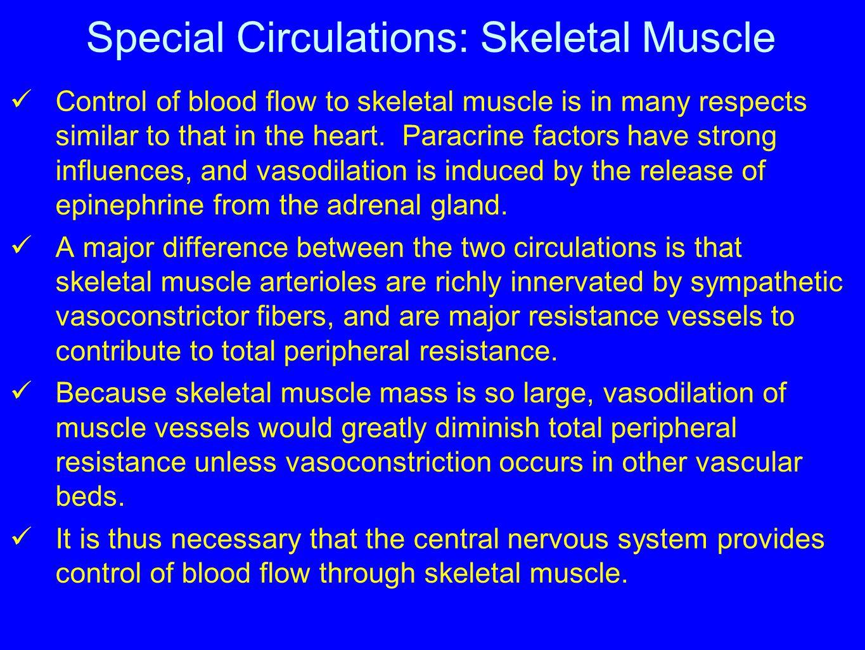 Special Circulations: Skeletal Muscle