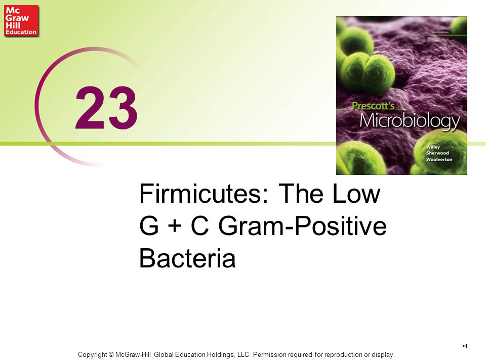 Firmicutes: The Low G + C Gram-Positive Bacteria