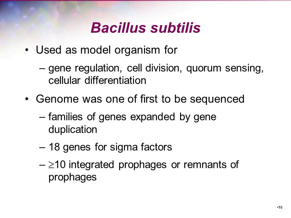 Bacillus subtilis Used as model organism for