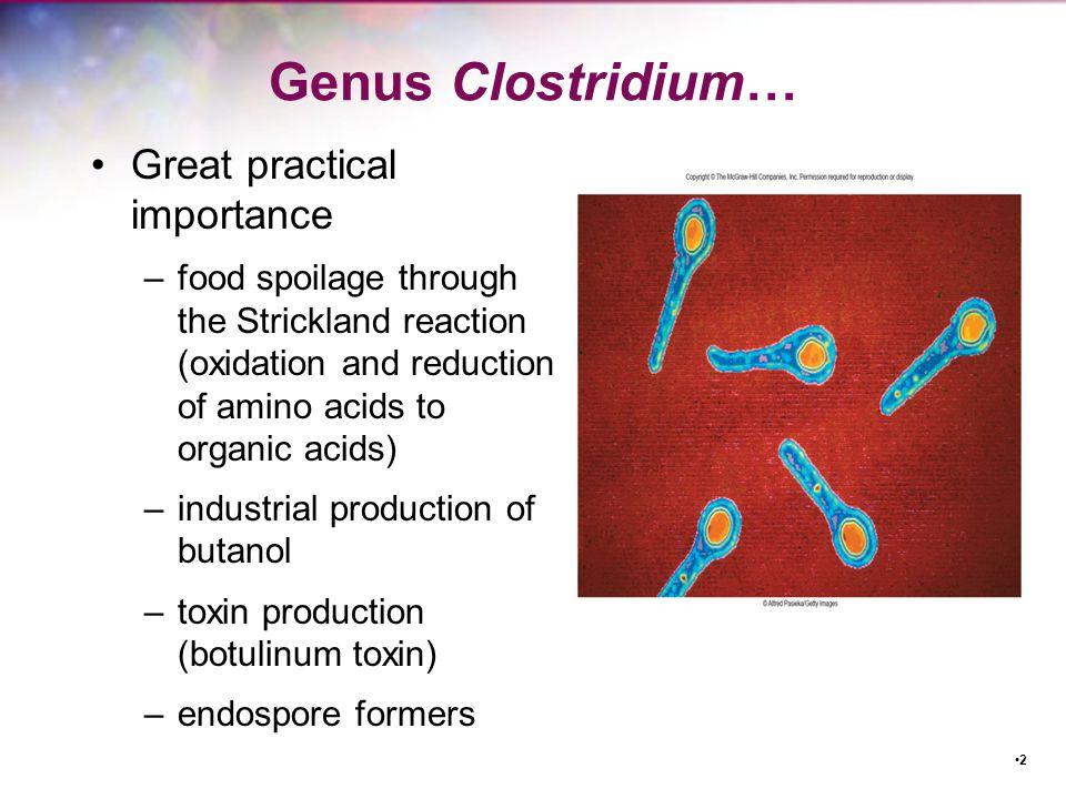 Genus Clostridium… Great practical importance