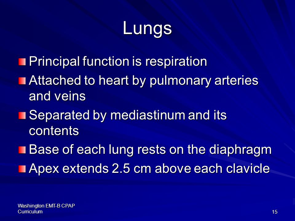 Lungs Principal function is respiration