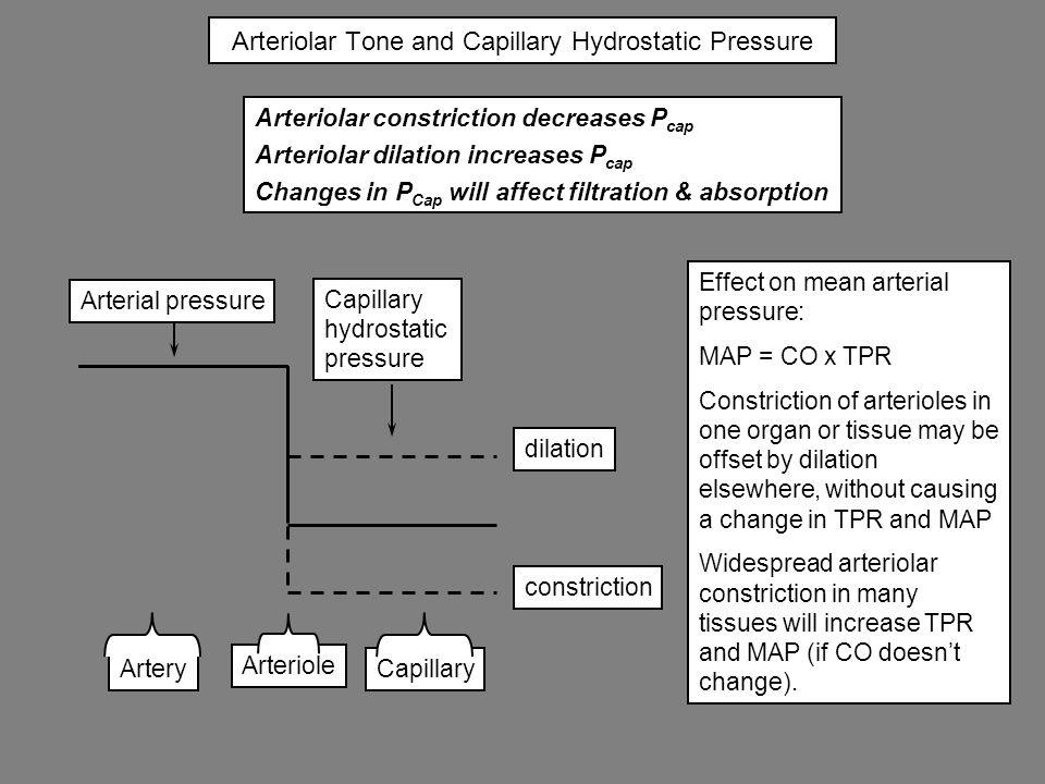 Arteriolar Tone and Capillary Hydrostatic Pressure