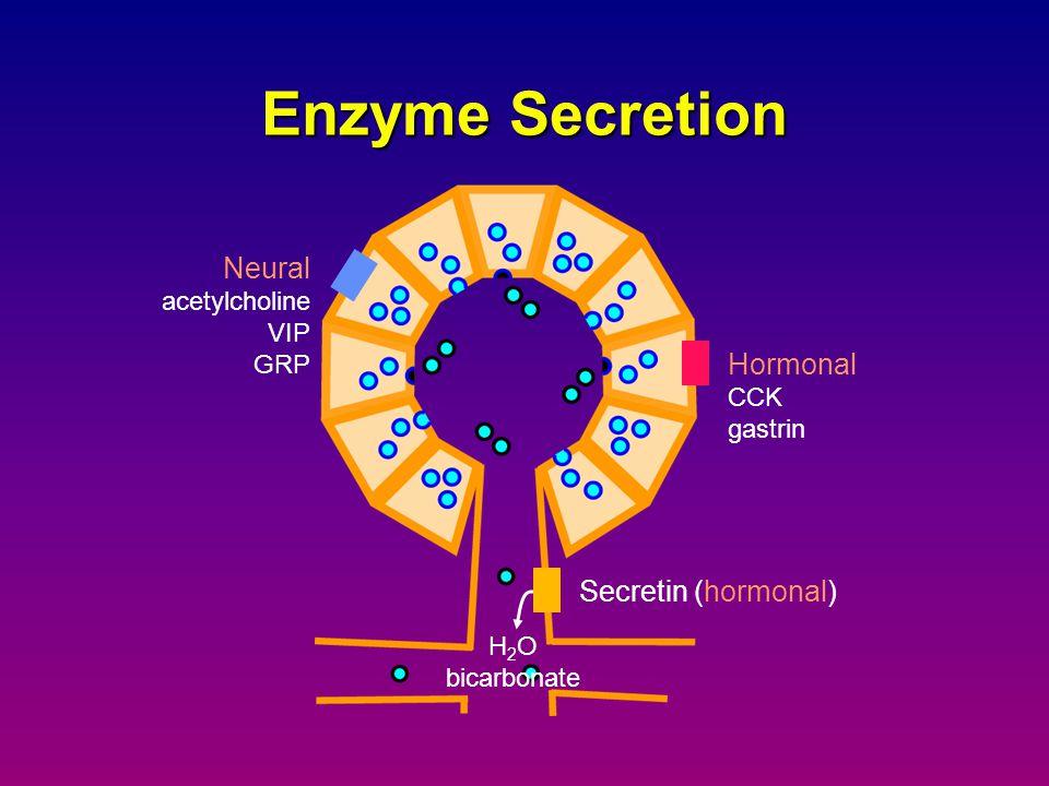Enzyme Secretion Neural Hormonal Secretin (hormonal) acetylcholine VIP