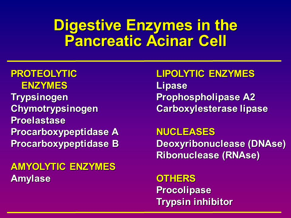 Digestive Enzymes in the Pancreatic Acinar Cell