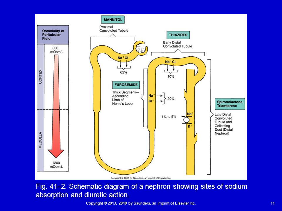Fig. 41–2. Schematic diagram of a nephron showing sites of sodium absorption and diuretic action.