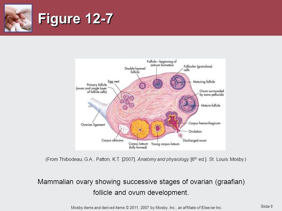 Figure 12-7