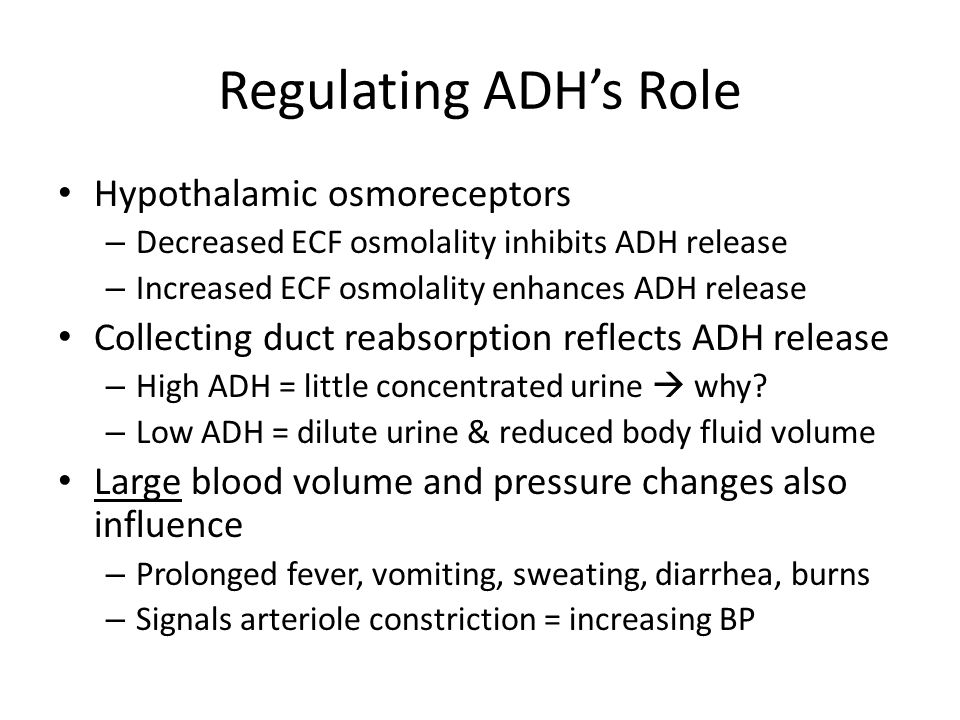 Regulating ADH's Role Hypothalamic osmoreceptors