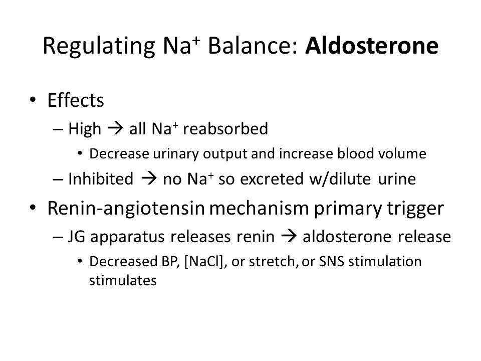 Regulating Na+ Balance: Aldosterone
