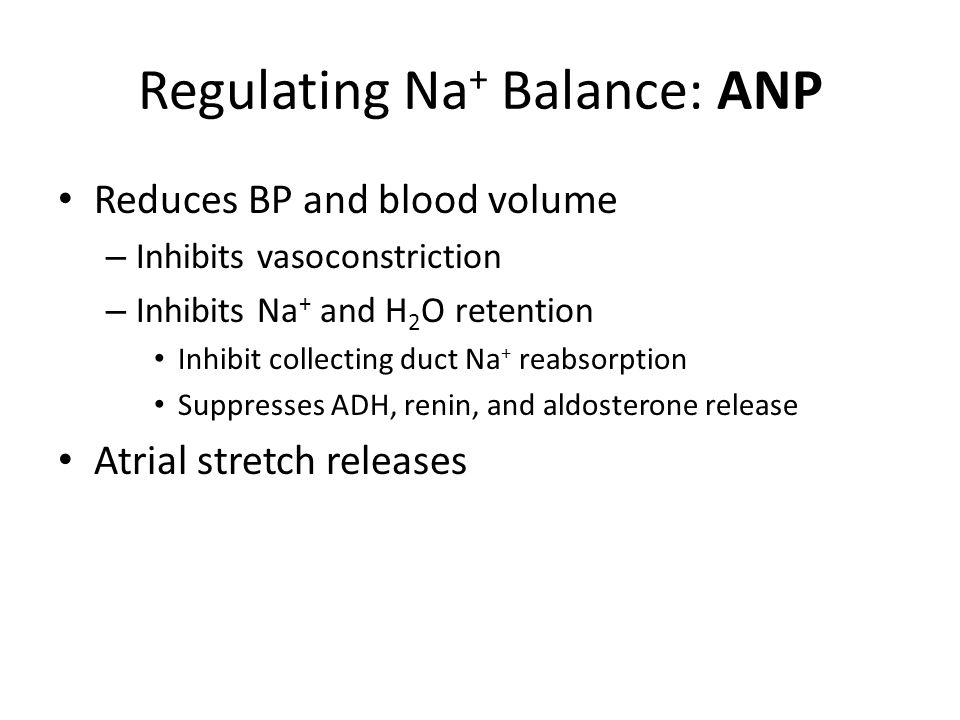 Regulating Na+ Balance: ANP