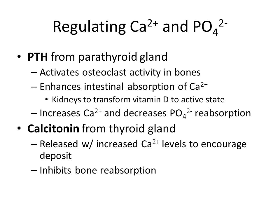 Regulating Ca2+ and PO42- PTH from parathyroid gland