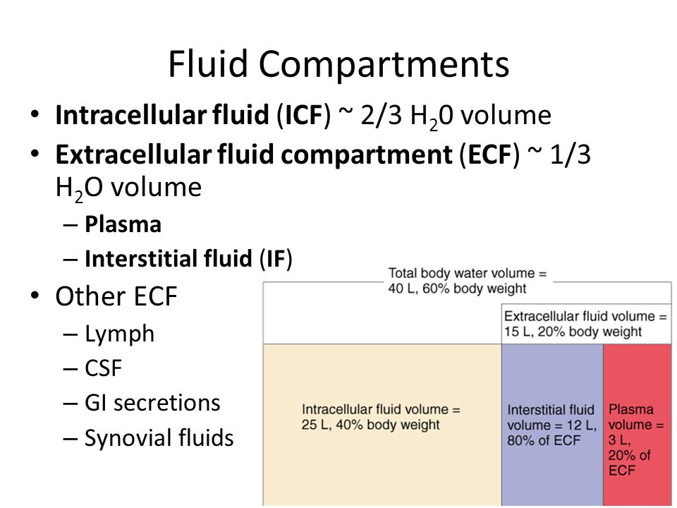 Fluid Compartments Intracellular fluid (ICF) ~ 2/3 H20 volume