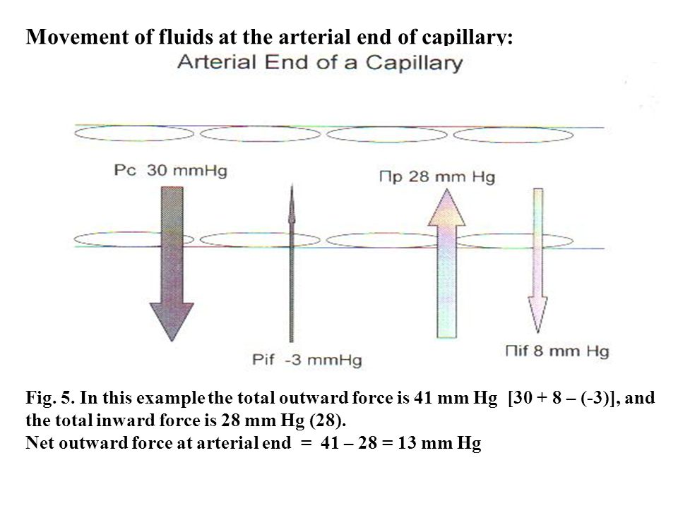 Movement of fluids at the arterial end of capillary: