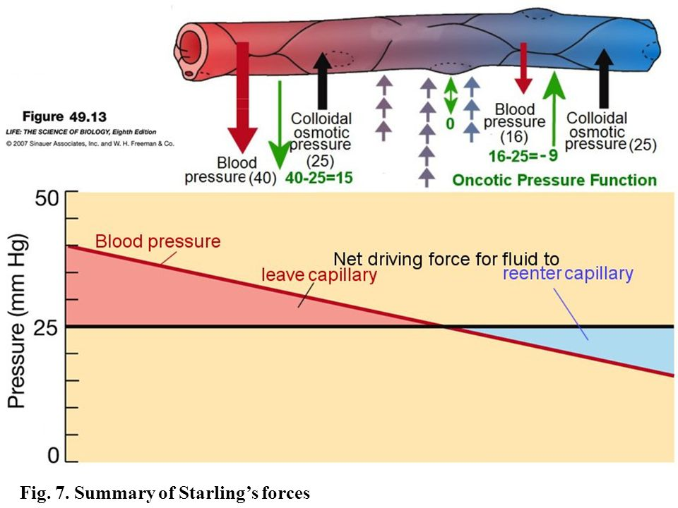 Fig. 7. Summary of Starling's forces
