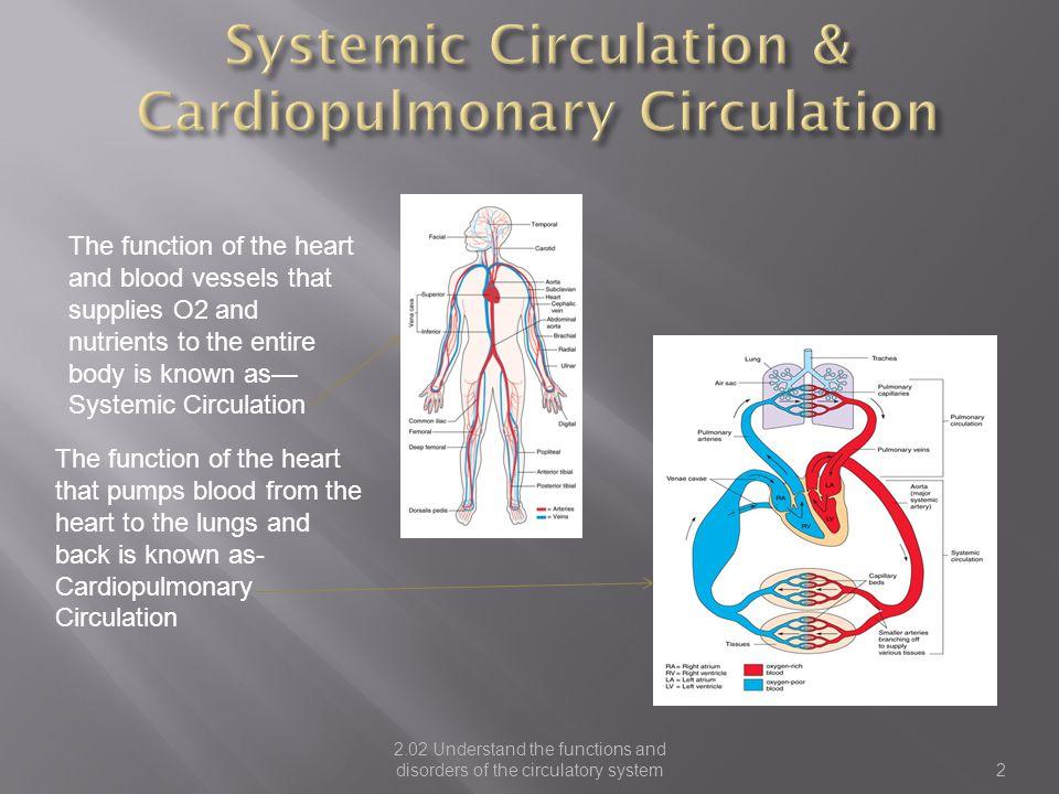 Systemic Circulation & Cardiopulmonary Circulation