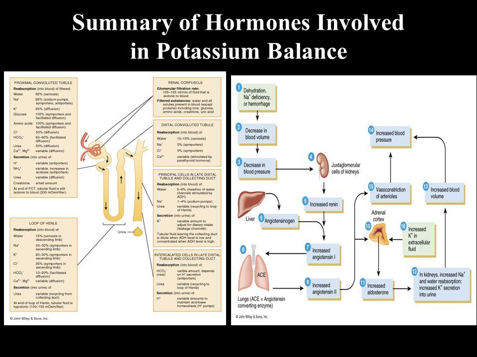 Summary of Hormones Involved in Potassium Balance