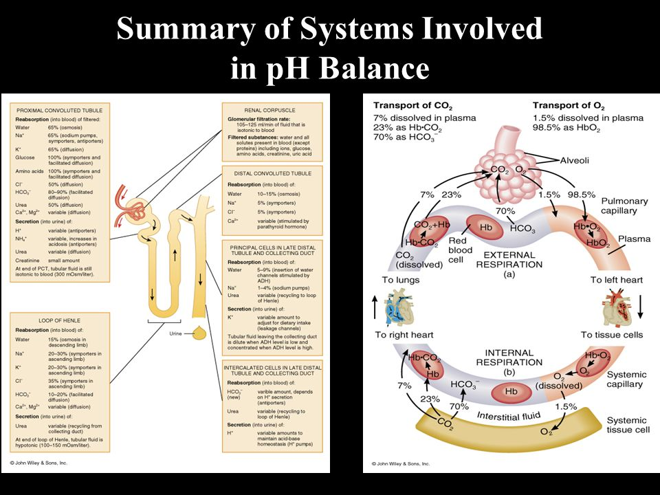 Summary of Systems Involved in pH Balance