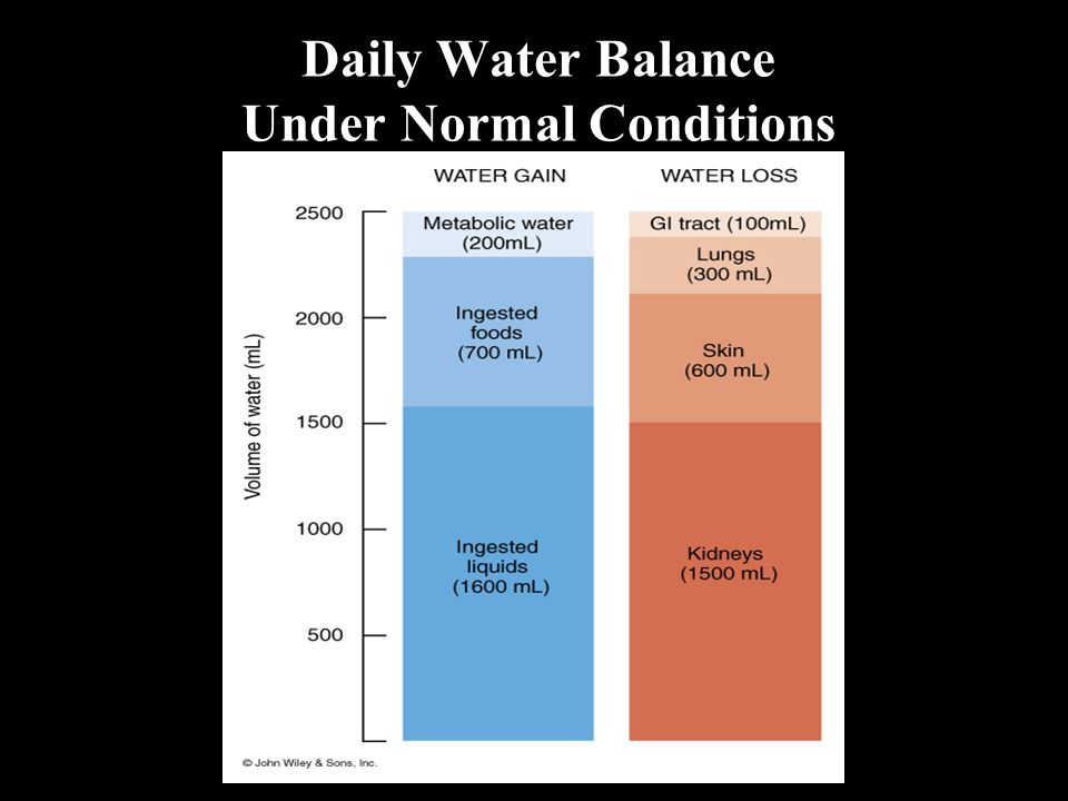 Daily Water Balance Under Normal Conditions