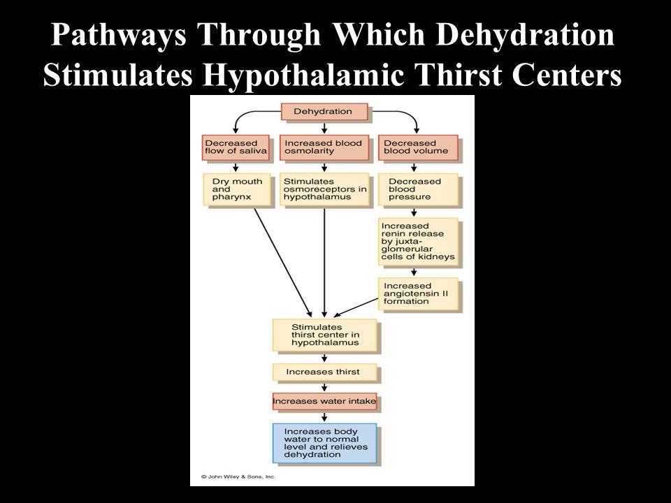 Pathways Through Which Dehydration Stimulates Hypothalamic Thirst Centers