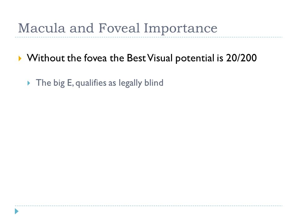 Macula and Foveal Importance